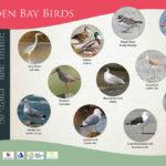 Design for Wildlife Information Board