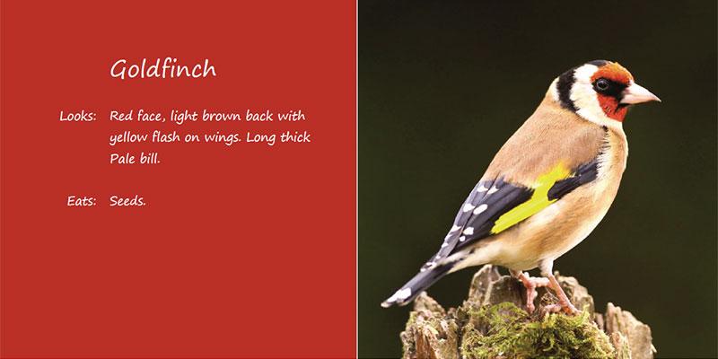 bird-book03