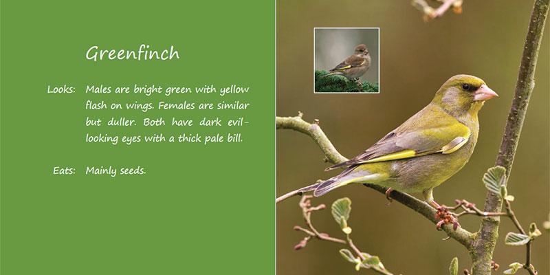 bird-book05